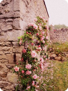 Roses at Notley Abbey