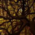Autumn at Kenwood House