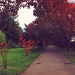 Autumn in Regents Park