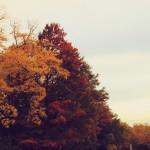 Autumn in Regent's Park
