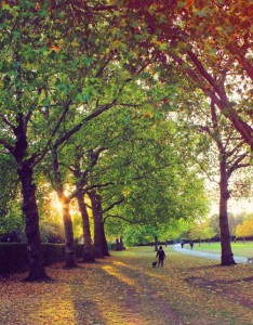 Autumn in Regent's Park